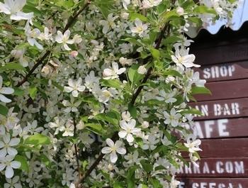 ひめりんごの花 アメリカ雑貨屋 サンブリッヂ SUNBRIDGE 岩手雑貨屋