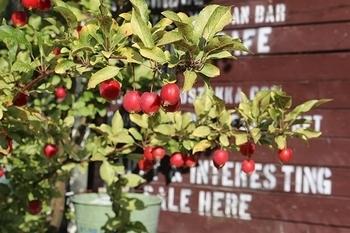 ひめりんご アメリカ雑貨屋 SUNBRIDGE サンブリッヂ 岩手矢巾町雑貨