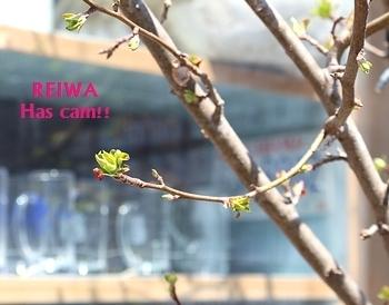 ヒメリンゴ アメリカ雑貨屋 SUNBRIDGE 岩手雑貨
