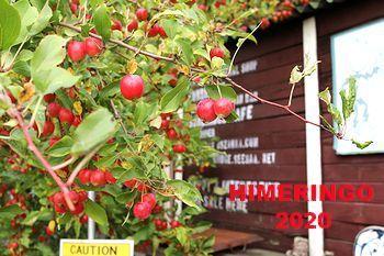 サンブリッヂ姫リンゴ ひめりんご アメリカ雑貨屋 SUNBRIDGE 岩手アメリカン雑貨屋 矢巾町