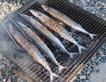 秋刀魚 雑貨屋サンブリッヂ 岩手雑貨屋 矢巾町