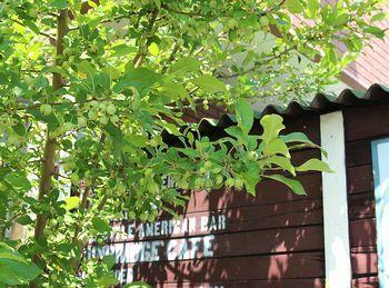 雑貨屋サンブリッヂ姫リンゴ アメリカ雑貨屋 SUNBRIDGE 岩手矢巾雑貨