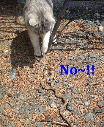岩手アメリカ雑貨 SUN BRIDGEブログ 猫VSヘビ